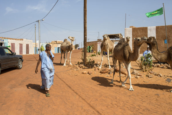 Image of the new city of Chinguetti. Camels are the traditional means of transport in this desert area and its meat is highly prized.